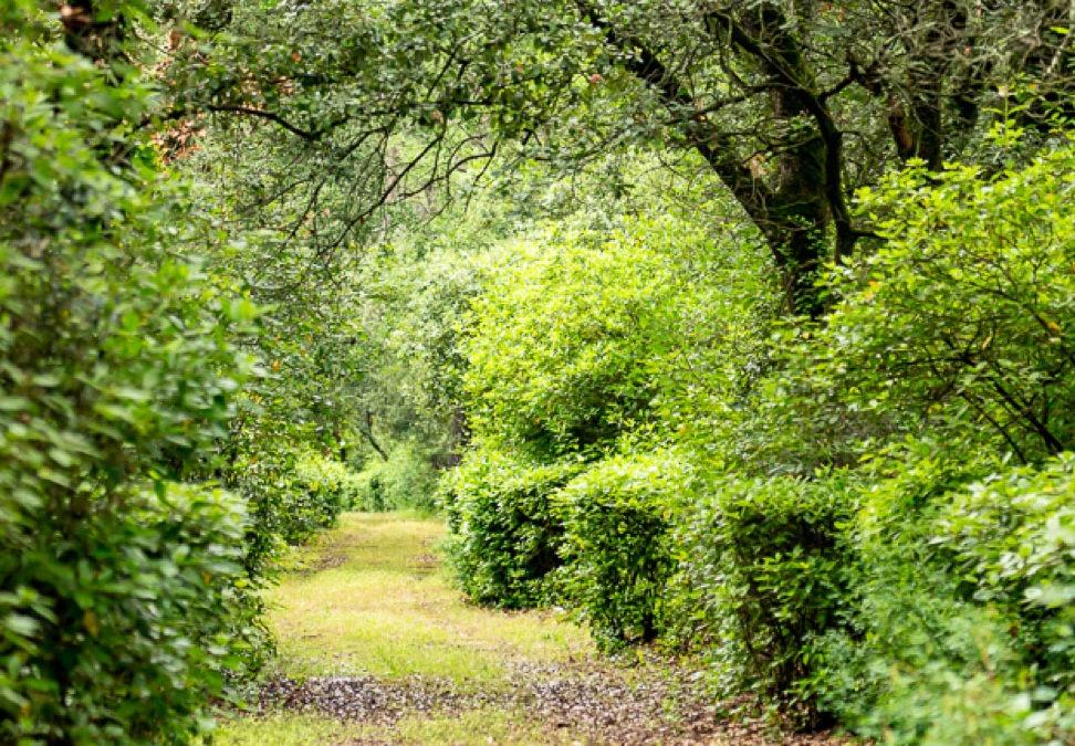 Pause Bien-être & Nature